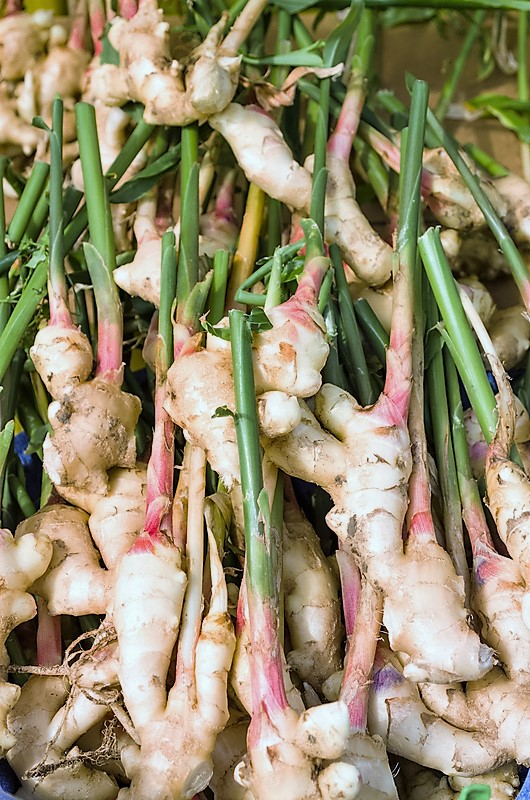Organic Ginger Tea Benefits - Both Psychological and Physiological