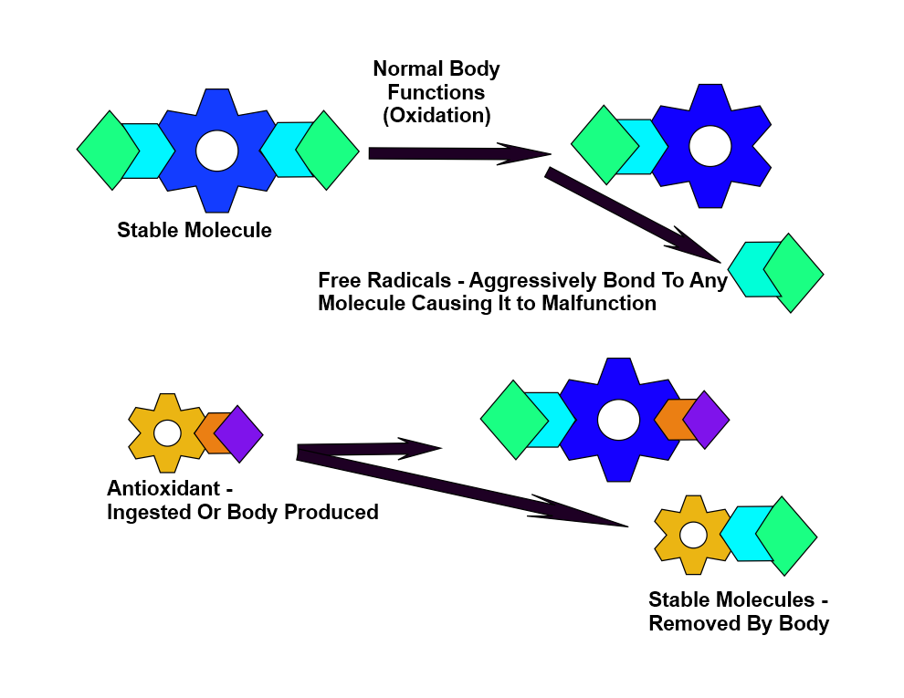 Organic Ginger Tea Benefits - Antioxidants Stabilize Free Radicals