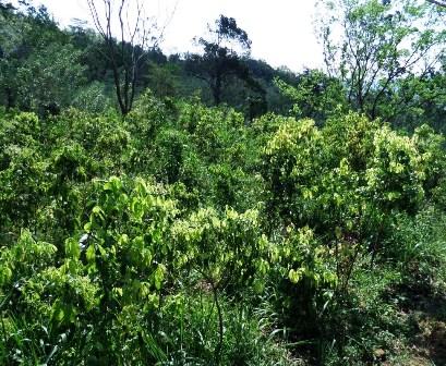 Organic Chai Tea - Starts With Ceylon Cinnamon