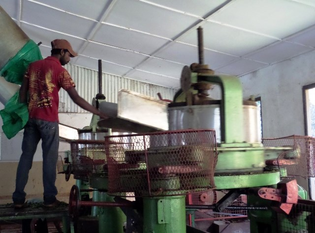 How The Tea Is Manufactured - Shredding Tea Leaves